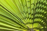 Sal : Santa Maria : palm leaf : Nature Plants